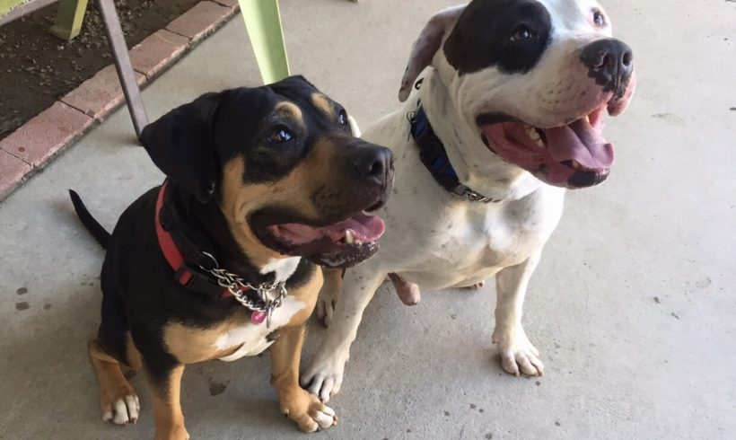 Chance & Allie – ADOPTED