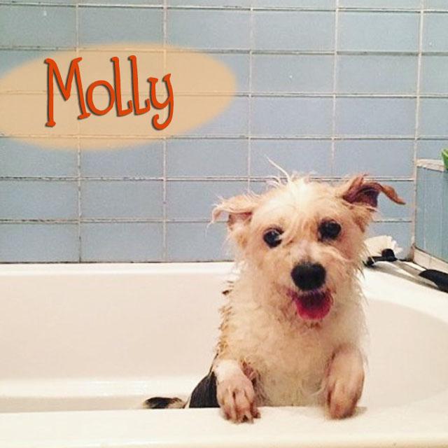 Molly & Gizmo